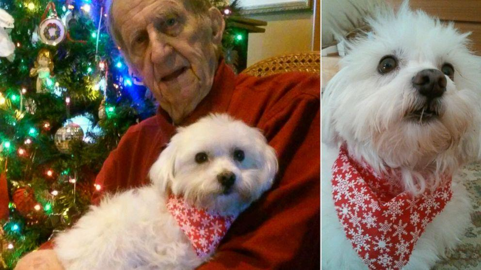 Stray Dog Credited for Christmas 'Miracle' Cancer Cure