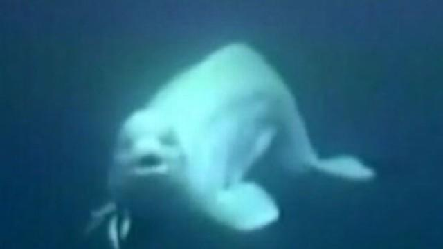 Instant Index:  Whale Imitates Human Speech; Unfinished John Lennon Lyrics