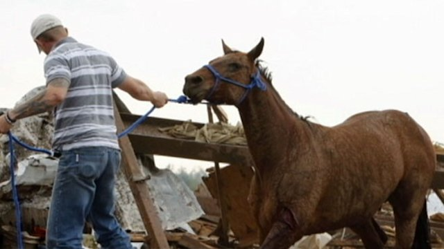 Animal Rescue Efforts After Destructive Tornado
