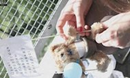 Belarus Expels Diplomat After Teddy Bear Drop