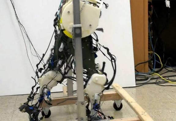 Robot Legs Mimic How Babies Walk