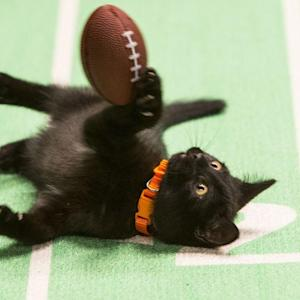 Kitten Bowl Returns! Who Will You Root For?