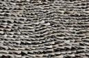 File photo of over ten thousand pieces of shark fins are dried on the rooftop of a factory building in Hong Kong