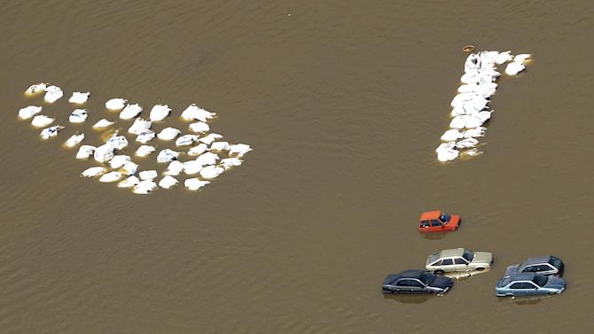 Cars stand next to unidentified objects in a flooded area by river Elbe in the enclosed village Fischbeck, central Germany, Tuesday, June 11, 2013. Weeks of heavy rain this spring have sent the Elbe, the Danube and other rivers such as the Vltava and the Saale overflowing their banks, causing extensive damage in central and southern Germany, the Czech Republic, Austria, Slovakia and Hungary. (AP Photo/Jens Meyer)