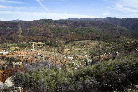 Millions of trees die in California drought, adding to fire danger