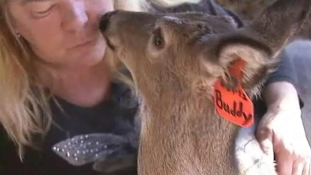North Carolina Woman Fights to Keep Rescued Fawn