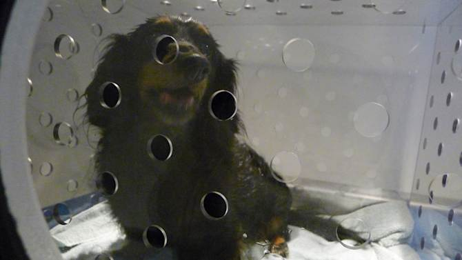 Ailing pets getting hyperbaric chamber treatment
