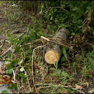Experts Warn Homeowners To Beware Of Rotting Trees