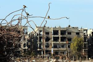 Birds sit on iron rods in the rubble of destroyed buildings …