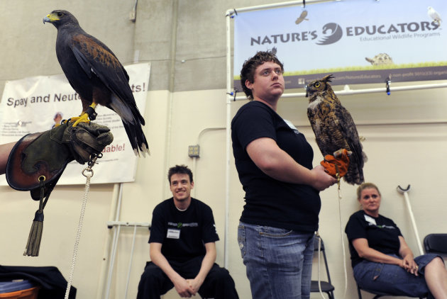 Adrien Hoff, left, (not pictured) holds a Harris Hawk, while Dani Paszek, center right, holds a Great Horned Owl while working at the Nature's Educators booth at the first Denver County Fair in Denver on Thursday, July 28, 2011. Joey Boyle, background left, and Julie Paszek, background right, also work at the booth. (AP Photo/Chris Schneider)