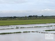 Palay (rice) output reached 7.58 million metric tons in the first six months of 2011. Overall, the agriculture sector reached a gross value of P706.4 billion, according to the Department of Agriculture.