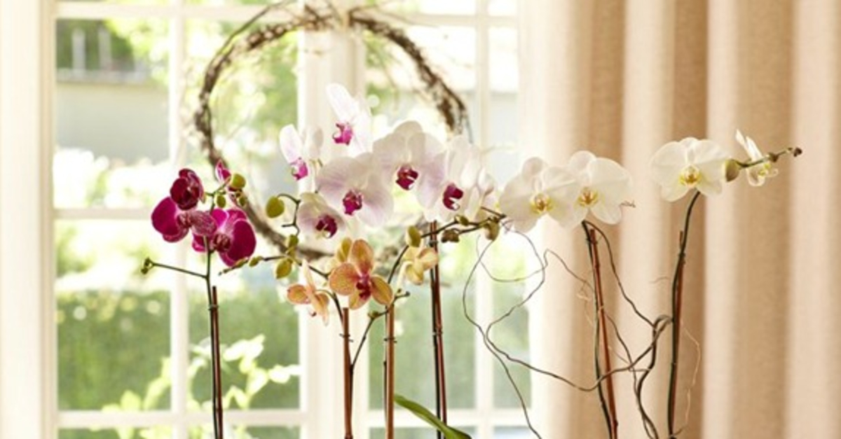 11 Creative Ways to Use Fresh Spring Flowers