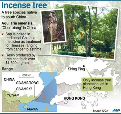 Graphic showing the location of the only incense plantation left in Hong Kong