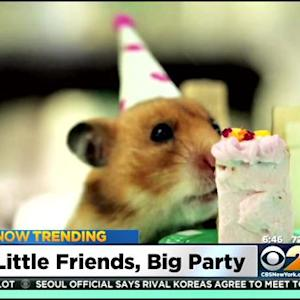 Now Trending: Little Friends, Big Party, Girl Talk And More!