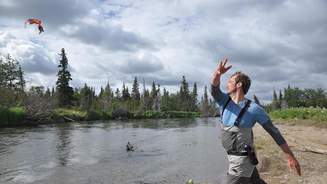 In this publicity photo provided by Wild River Fishing Guides Company, chef and seafood sustainability advocate, Barton Seaver, tosses a fish back into the Stuyahok River in southwestern, Alaska. (AP Photo/Wild River Fishing Guides Company, Mark Rutherford)