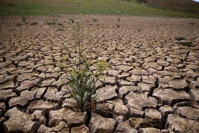 California just imposed mandatory water restrictions for the first time in history