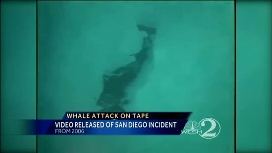 San Diego SeaWorld trainer struggles to get away from whale