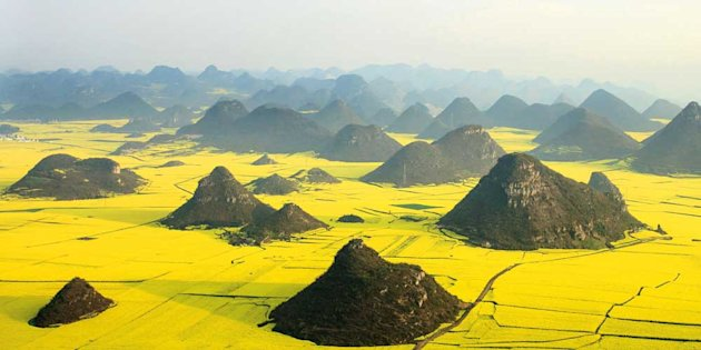 This is one of the amazing images of bright yellow rapeseed fields that look like custard