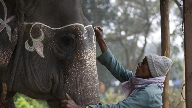A mahout decorates his elephant using chalk while preparing for the Elephant Festival at Sauraha in Chitwan