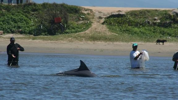 Dolphins Help Fishermen Catch Fish