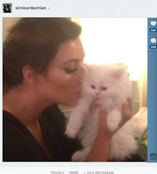 Kim Kardashian Left Heartbroken After Beloved Kitten Mercy Dies