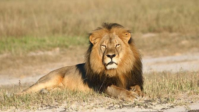 Cecil the Lion's brother killed by hunter, says Zimbabwe Conservation Task Force
