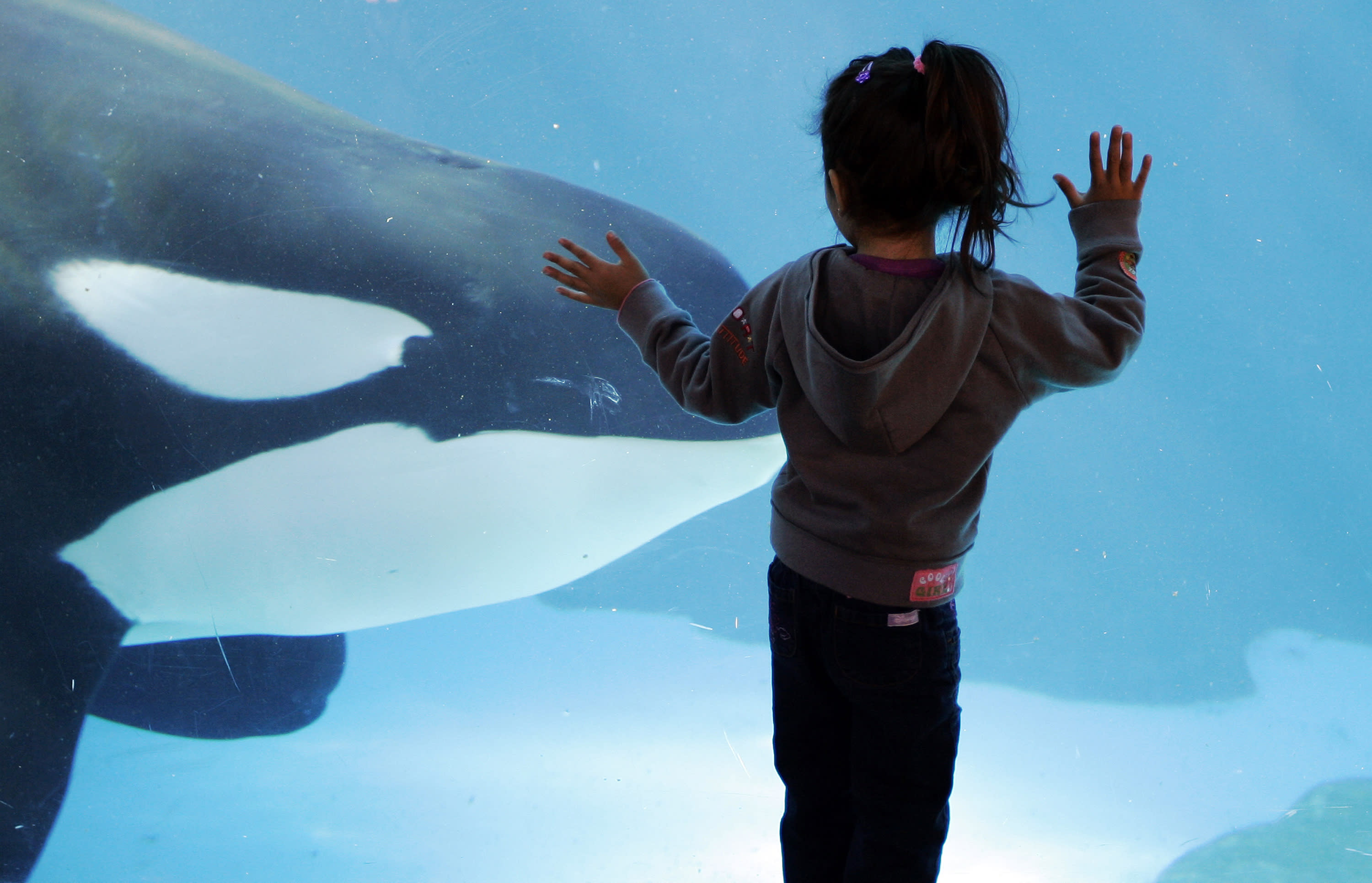 California agency to eye bigger whale tanks at SeaWorld