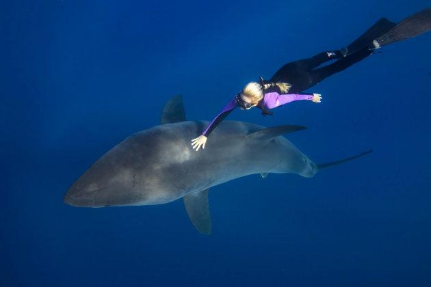 White Shark Freediver