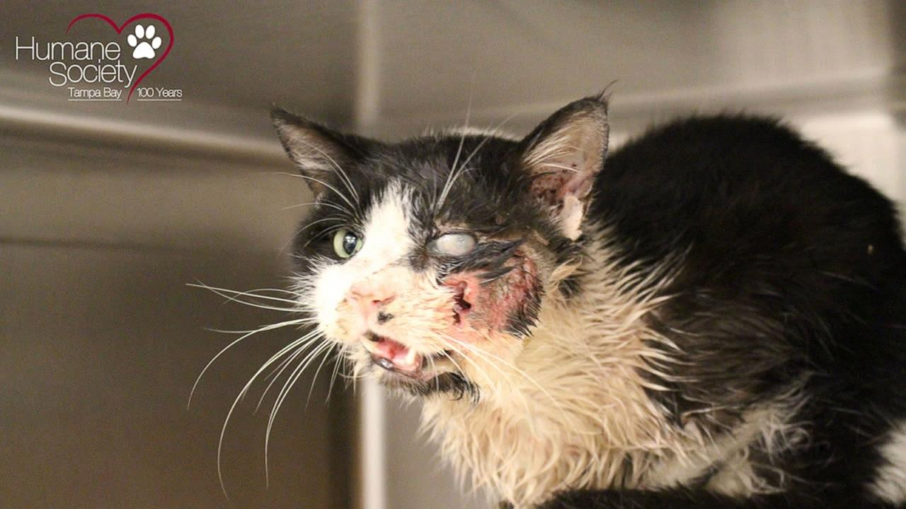 Zombie Cat: Buried Kitty Believed Dead, Meows Back to Life
