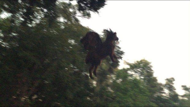 The Internet is flipping out over this photo that purportedly shows the Jersey Devil