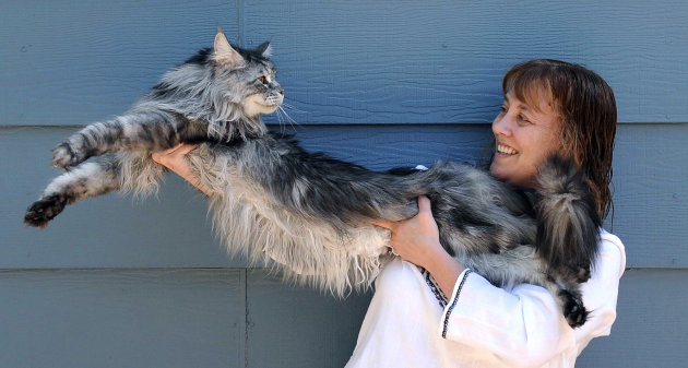f8fe19245ccaac04280f6a706700f23d - Stewie the world's longest cat dies in Nevada - Philippine Business News