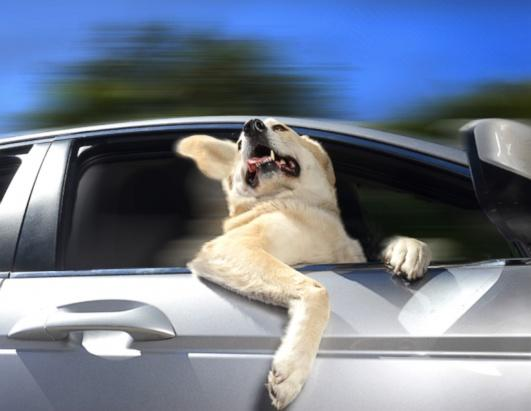 ht_dogs_in_cars_calendar_10_ll_131203_ssh.jpg