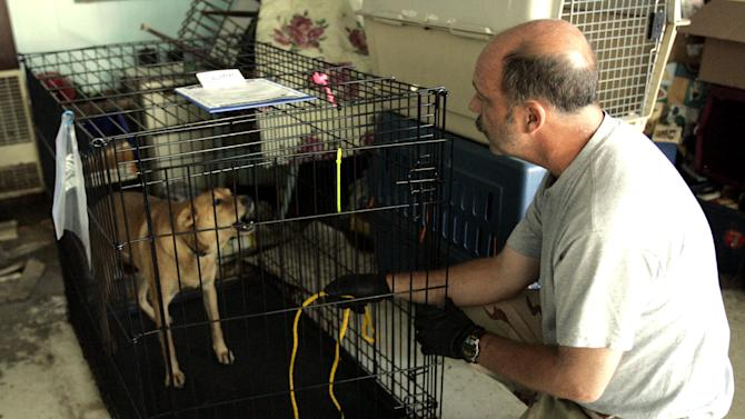 In this Oct. 15, 2005 photo, dog bite expert Jim Crosby, from Jacksonville, Fla., tries to coax a nervous dog out of it's cage at Muttshack Animal Rescue Foundation shelter in New Orleans, La., Saturday, Oct. 15, 2005.   (AP Photo/Don Ryan)