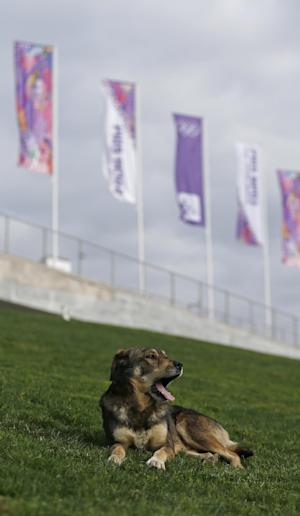 IOC: No healthy stray dogs being killed in Sochi