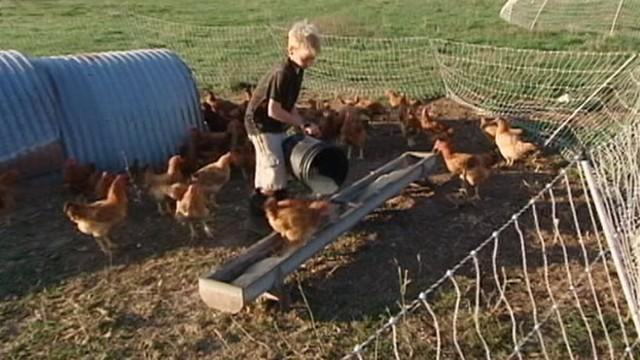 Children Raised on Farms Develop Better Immune Systems