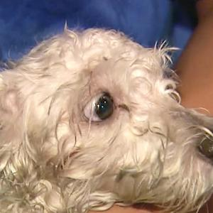Car chase ends when van hits dog