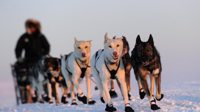 FILE - Iditarod musher Peter Kaiser, from Bethel, Alaska, races from Safety to the Nome, Alaska finish line of the 2011 Iditarod Trail Sled Dog Race, March 15, 2011. (AP Photo/Anchorage Daily News, Bob Hallinen, File)