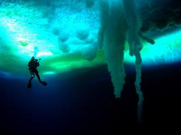 A diver under the ice in THINKFilm's Encounters at the End of the World