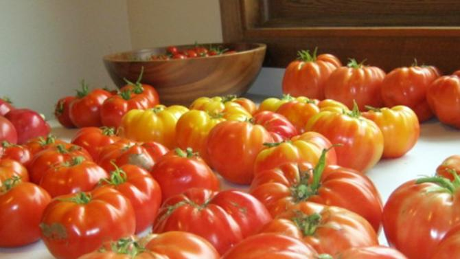 This Sept. 3, 2012 photo provided by Eric Ciula shows shows tomatoes from his garden in Cottage Grove, Wis.  April is a planning month for gardeners throughout the middle of the country, and many are trying to figure out what to do amid rapidly shifting weather conditions. (AP Photo/Eric Ciula)