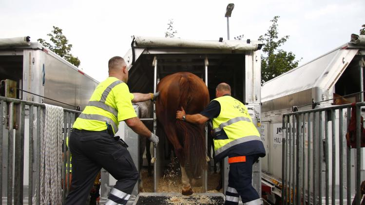 Workers walk a horse into a flight container at the freight center in Fraport airport