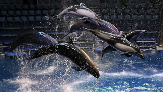 Dolphins and whales jump out of the water at a media preview for the Epson Aqua Park Shinagawa aquarium's re-opening in Tokyo