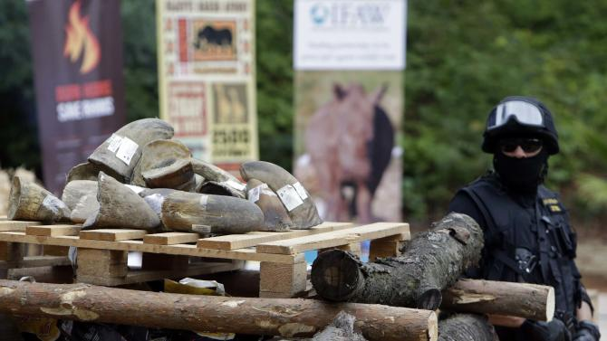 Customs officer stands guard next to rhino horns during the Global Rhino Horn Burning Ceremony on the eve of World Rhino day at Dvur Kralove zoo