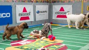 TV Ratings: Animal Planet's 'Puppy Bowl' Audience Swells During Superdome Blackout
