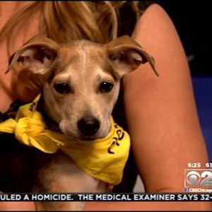 PAWS Pet Of The Week: Thumbelina