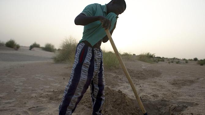 """In this July 23, 2013 photo, Sidi Fassoukoy, searching for his missing brother, covers his nose against the smell as he unearths the remains of two men buried in the desert outside Timbuktu, Mali. From the men's clothing, Fassoukoy was able to identify the bodies as those of his brother, Maouloud Fassoukoy, and their neighbor, """"Vieux"""" Ali Ould Kabbad, a lifelong Arab resident of Timbuktu whom Maouloud was killed for defending. Mali's military has killed or taken away at least 35 civilians in 2013, many of them Arabs and Tuaregs, according to human rights groups. An AP investigation uncovered the remains of six of these men, whose families identified the bodies and said they were last seen being taken away by Malian soldiers. (AP Photo/Rebecca Blackwell)"""