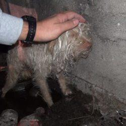 This Dog Was Rescued From A Sewer Tunnel. Within Hours, He Was Transformed