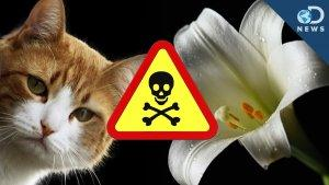 These Plants Could Kill Your Pet! - Discovery News