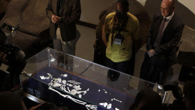 One of two sets of bones from Australopithecus Sediba, found in South Africa are unveiled at the University of the Witwatersrand in Johannesburg, Thursday, Sept. 8, 2011. The bones offer the most powerful case so far in identifying the transitional figure that came before modern humans, finding some are are calling a potential game-changer in understanding evolution. (AP Photo/Denis Farrell)