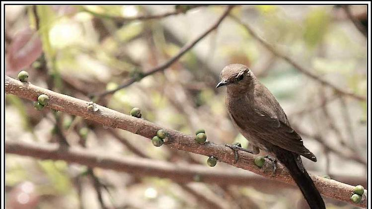 Wildlife Travel Brown Rock Chat