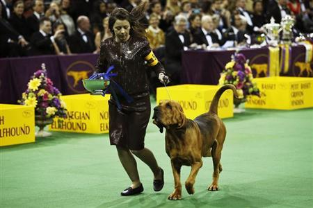 2014 Westminster Kennel Club Dog Show in New York February 10, 2014